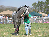 Torlundy wins Imperial Cup at Ford Conger Field, Aiken, S.C> 3/20/2010, for trainer Leslie Young and jockey Paddy Young.