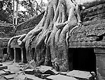 Ta Prohm Roots And Stone 11 - Silk-cotton tree roots growing over the inner enclosure Western gallery, Ta Prohm Temple, Angkor, Cambodia