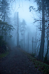 Forest in the mist, Stanly park, English bay. Vancouver,British Colombia, Canada
