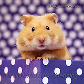 Xavier, ANIMALS, REALISTISCHE TIERE, ANIMALES REALISTICOS, photos+++++,SPCHHAMSTER200,#A#, EVERYDAY ,funny