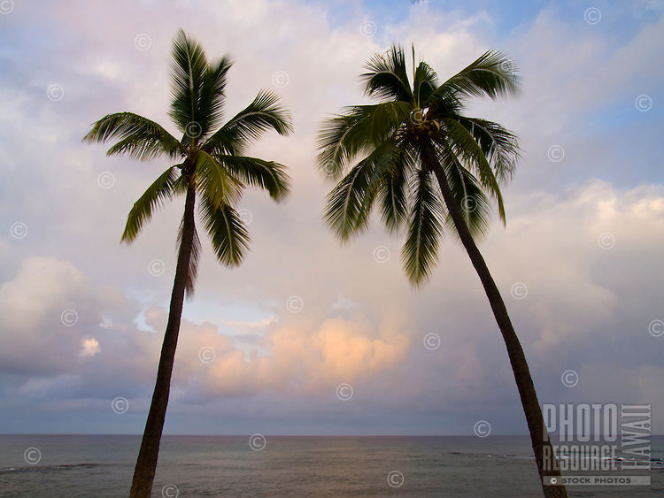 Two palm trees againt a cloudy sunrise viewed at Honi's Beach, Kailua-Kona, Big Island.