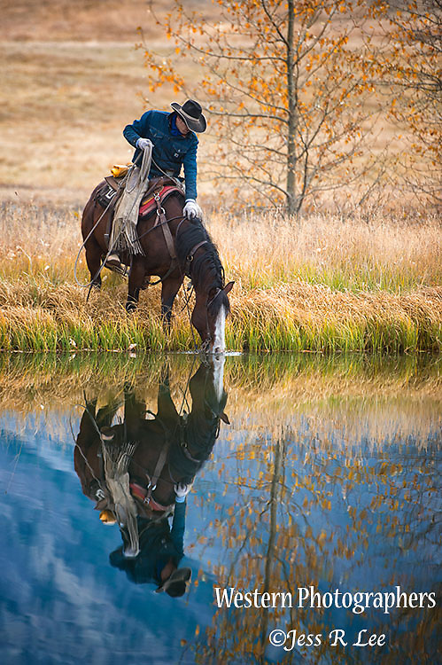 A photo of a cowboy giving his horse a drink from the waterhole. Cowboy Photos, riding,roping,horseback