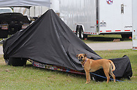 Apr. 27, 2013; Baytown, TX, USA: A dog in the pit area of an NHRA super comp dragster team during qualifying for the Spring Nationals at Royal Purple Raceway. Mandatory Credit: Mark J. Rebilas-