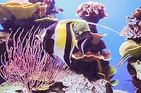 Fische im Aquarium von Palma de Mallorca - Palma de Mallorca 26.05.2019: Aquarium von Mallorca in Plama
