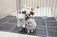 Scientists at Soam Biotech in South Korea carry out an operation on a dog to remove tissue as part of the cloning process in Seoul, South Korea. The technique involves taking a single skin cell from the original animal and replicating its DNA to create a man-made embryo, which is born after two months' gestation.The South Korean company is expert at cloning dogs. The company says it has cloned at least 400 dogs around the world, including rescue and police dogs for the South Korean government and dozens of pets for wealthy American owners. <br /> <br /> Photo by Jae-hyun Kim / Sinopix