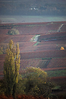 Europe/France/Champagne-Ardenne/51/Marne/Ville-Dommange: Vignoble champenois