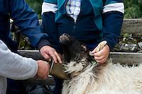 Euskal artzaiak Aralarko Pagabe bordan / Basque shepherds in 'Pagabe' borda, Aralar. Euskal Herria / Basque Country . Basque shepherd daily life..Photo: Ander Gillenea