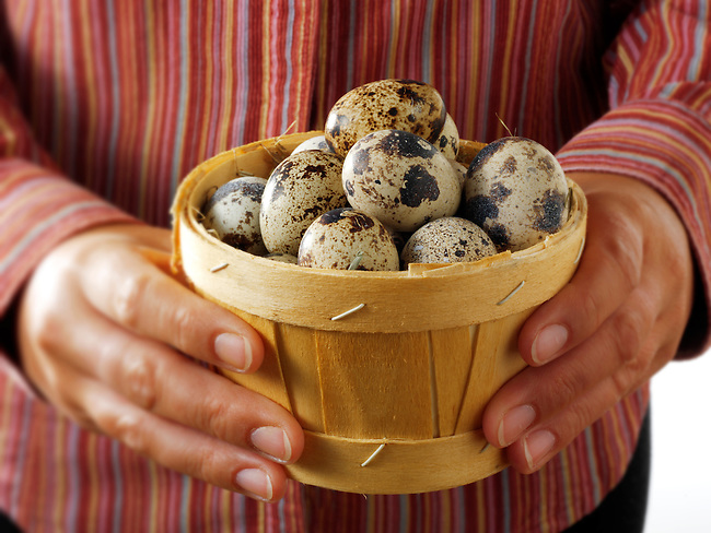 Fresh  Organic quails Eggs