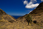 Palm tree against the blue sky and Atlantic of the rugged Canarian mountain pass on the west coast of Gran Canaria, Mogan to Agaete road. Gran Canaria, Canary Islands, Spain.