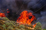 August 25, 1999 Buck Meadows, California -- Pilot Fire – Fire under the Hetch Hetchy power lines. The Pilot Fire burned 3,300 acres in the Tuolumne River Canyon near Yosemite National Park. The fire burned across the Hetch Hetchy power lines.