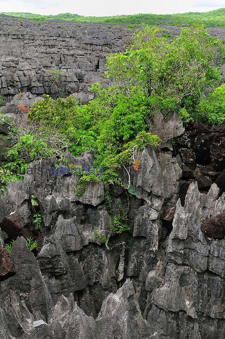Tsingy Limestone Pinnacles, Ankarana National Park, Northern Madagascar