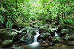 Waterfalls cascading through lowland rainforest, Tawau Hills Park, Sabah, Borneo, Malaysia