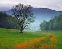 Foggy sunrise in Cades Cove; Great Smoky Mountains National Park, TN