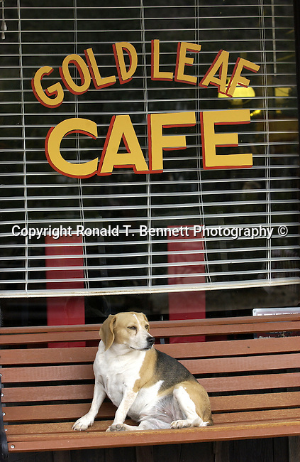 Gold Mining cafe dog sits on bench Gold mining ghost town, dog, dog sit, dog sit on bench, dog sit in front restaurant,ghost town, dog, dog sit, dog sit at restaurant, Gold mining, gold, goldmine, remove gold, wheels from gold mine, Mining equipment, gold panning, open pit, gold extraction, gold rush, gold prospecting, ore, ore genesis, placer mining,Arizona, State of Arizona, Southwest, desert, 48th State, Last of contiguous states, Phoenix, Scottsdale, Grand Canyon, Indian reservations, four corners, desert landscape, exrophyte, western United States, Southwest, Mountains, plateaus, ponderosa pines, Colorado River,  Mountain lion, Navajo Nation, No daylight savings time, Arizona Territory, Arizona,