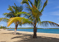 Vieques Island, Puerto Rico<br /> Palm trees on the beach at Sun Bay, Caribbean island of Vieques