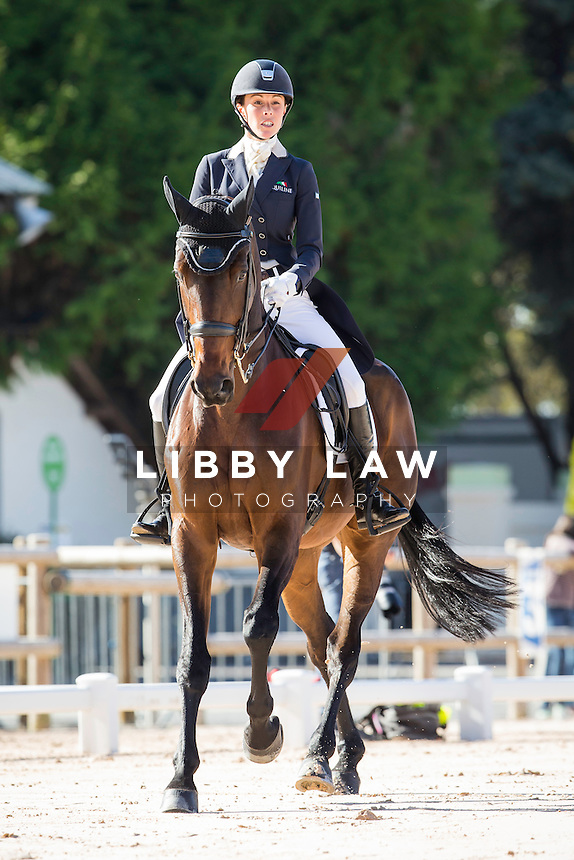 GBR-Dee Hankey (CHEQUERS PLAYBOY) INTERIM-7TH: CCI4* DAY ONE OF DRESSAGE: 2014 FRA-Les Etoiles de Pau (Thursday 23 October) CREDIT: Libby Law COPYRIGHT: LIBBY LAW PHOTOGRAPHY - NZL