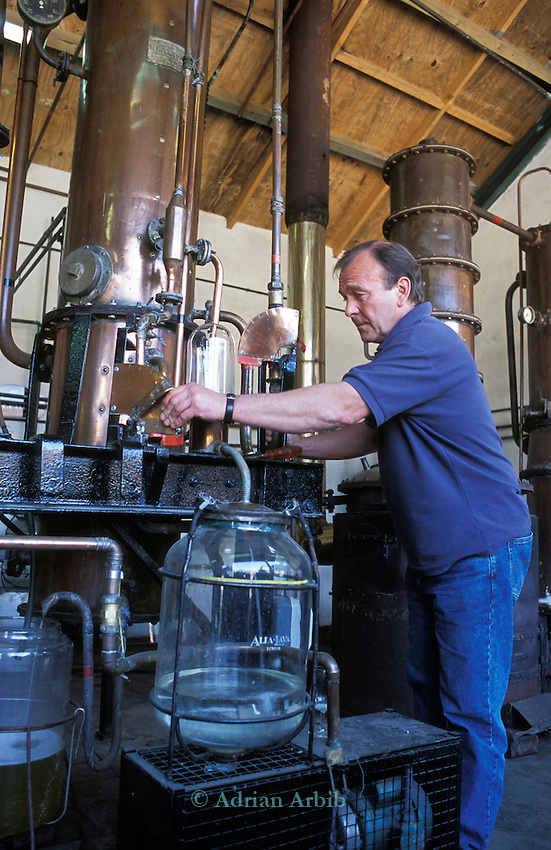 Burrow Hill cider, distilling cider into cider brandy and Eau de Vie. Somerset.