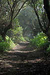 Track through the woods, El Hierro, Canary Islands, Spain.