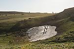 A herd of wild horse run through a leftover snow melt in the Pryor Mountains, Montana.