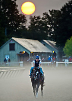 SARATOGA SPRINGS, NY - AUG 26: A horse exercises on the Oklahoma Training Track just after sunrise on the morning of Travers Stakes Day at Saratoga Race Course o August 26, 2017 in Saratoga Springs, New York (Photo by Scott Serio/Eclipse Sportswire/Getty Images)