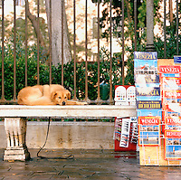 A dog sitting on a bench near a tourist stand, Venice, Italy