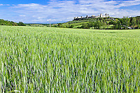 Wheat field and distant Monteriggioni, in the province of Siena, in the Italian region of Tuscany.