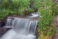 Cover grows along a small stream in this Colorado image. These little streams flow down from Berthoud Pass in Grand County, Colorado. In the mid summer months, finding Colorado pictures like this is pretty easy if you are willing to hike a little ways.
