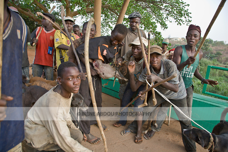 A group of hunters pass through Abuja's Millenium Park on their way home at the end of the day.  One hunter carries a bush rat kill.