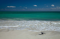 Seagull on Beach, Bahia Honda Key State Park, Florida Keys, FL, America, USA.