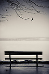 Empty bench on ocean walk with view across to land with one leaf on tree branch hanging down