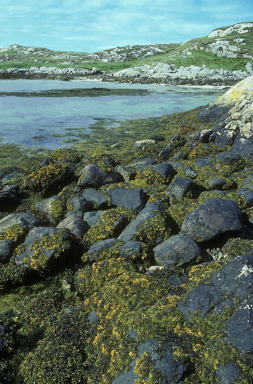 Sheltered Rocky Shore, Outer Hebrides, Scotland UK