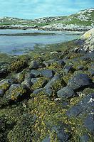Sheltered Rocky Shore, Outer Hebrides, Scotland UK