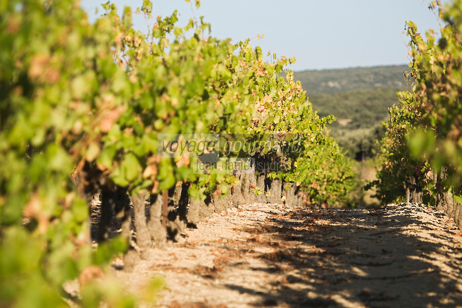 Europe/France/Languedoc-Roussillon/30/Gard /Env de Flaux: