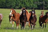 Bob, ANIMALS, REALISTISCHE TIERE, ANIMALES REALISTICOS, horses, photos+++++,GBLA4398,#a#, EVERYDAY