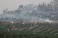 Fire creeps towards a citrus orchard in the Rancho Santa Fe neighbour hood of northern San Diego County on Monday, October 22 2007.