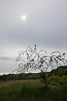 albero e sole dietro le nubi nella campagna di Portacomaro stazione