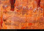 Bryce Canyon Fin Detail, Agua Canyon, Bryce Canyon National Park, Utah