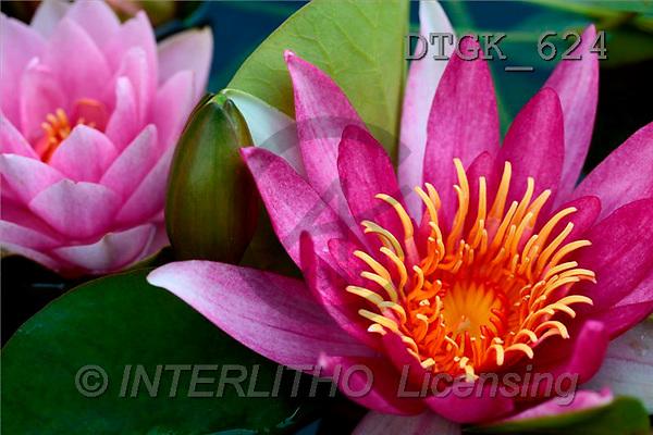Gisela, FLOWERS, photos(DTGK624,#F#) Blumen, flores, retrato