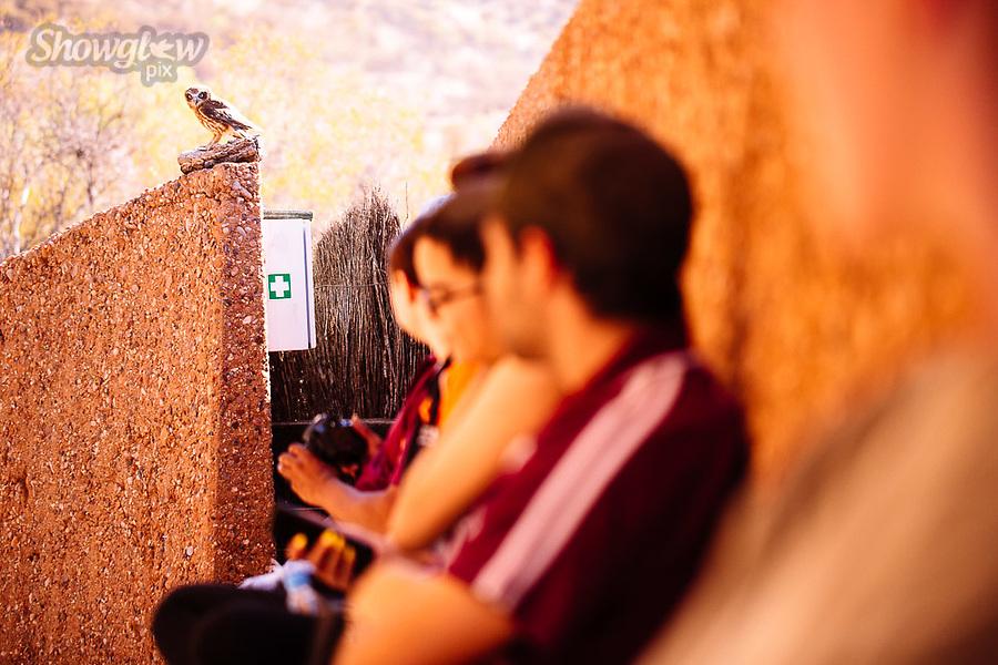 Image Ref: CA624<br /> Location: Desert Park, Alice Springs<br /> Date of Shot: 17.09.18