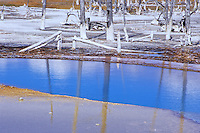 Calcium Carbonate coated tree trunks reflect in the blue waters of a thermal pool at Black Sand Basin in the Upper Geyser Basin area in Yellowstone National Park in Wyoming