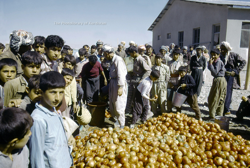 Iran 1974.Camp de réfugiés kurdes à Ziwa, distribution de tomates.Iran 1974.Kurdish refugees' camp, delivery of tomatoes