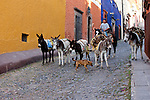 A young man delivers firewood to the homes in San Miguel de Allende. The firewood is strapped to uncomplaining donkeys who are, in turn, kept in line by a dog. Guanajuato, Mexico