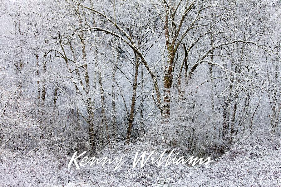 Snow Sugarcoated Forest, Wintertime, Cascade Mountain Range, Washington, USA.