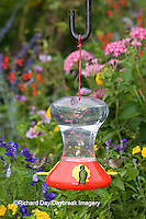 01162-12519 Ruby-throated Hummingbirds (Archilochus colubris) at feeder near flower garden,  Marion Co.  IL