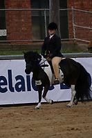 Pony NE 11hh