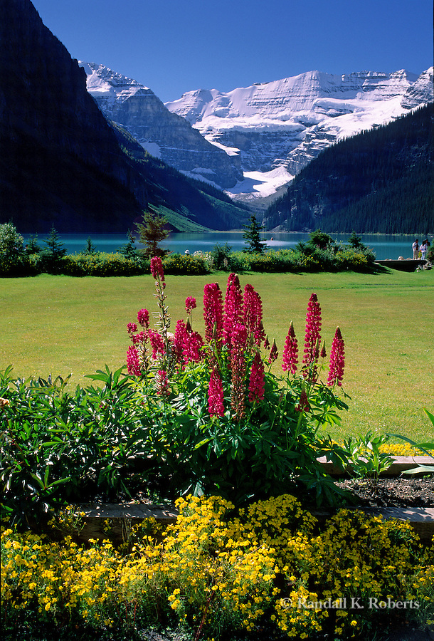 Flowers bloom in the sun framing Victoria Glacier, Lake Louise, Banff National Park, Alberta, Canada