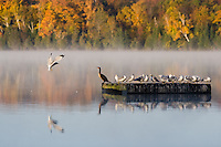 Cottage country in Autumn is a rich and vibrant experiences