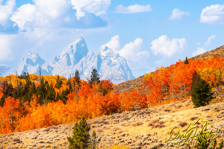Red aspens of the Grand Tetons, Fall Colors<br />