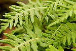 Lush Green Fern