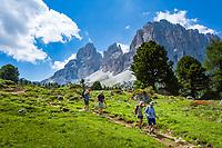 Italy, South Tyrol (Trentino - Alto Adige), Dolomites, near Selva di Val Gardena: hiking through alpine pastures with Sasso Lungo mountain near Sella Pass Road | Italien, Suedtirol (Trentino - Alto Adige), oberhalb von Wolkenstein in Groeden: Wandern ueber Almwiesen vom Langkofel an der Sella-Joch-Passstrasse